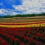 【北海道】夏休みに家族旅行で行きたいおすすめ観光スポット22選!