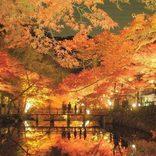 この秋カップルで行きたい【愛知】おすすめデートスポット21選!紅葉スポットも!