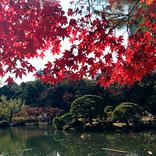 【東京】11月のおすすめ観光スポット20選!定番から穴場まで