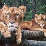 【日本全県】おすすめ水族館・動物園47選!デートや家族でのおでかけに!
