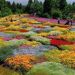 【全国】おすすめ花畑35選!キレイすぎる一面の花々に癒されたい!