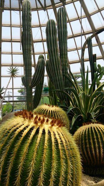 姫路市立手柄山温室植物園