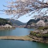 春が来た!絶対行くべき福岡の花見スポット8選!