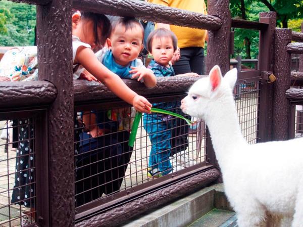 長野市茶臼山動物園・恐竜園