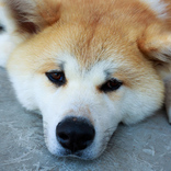 保護犬を迎えるという選択肢 殺処分ゼロのためにできること