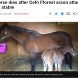 優秀な競争馬を育ててきたブリーダーの馬小屋が放火 2歳の子馬が犠牲に(英)