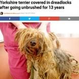 13年間飼育放棄されたヨークシャー・テリア、新しい飼い主が見つかるも安楽死に(英)<動画あり>