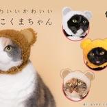 猫がもこもこのクマに大変身 猫専用のかぶりもの「ねこくまちゃん」が新登場