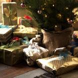 サンタさんって、本当は…? 成長した子どもとのクリスマスの楽しみ方【OVOクリスマス2017】