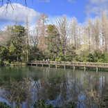 『ブラタモリ』吉祥寺を歩く 井の頭池「池の水を抜く活動」でテレ東を連想する人も