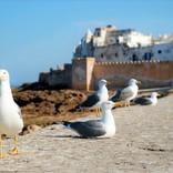 青と白のフォトジェニックなモロッコの世界遺産の港町・エッサウィラを散策