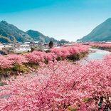春を先取り!名所を巡る「梅」と「桜」の花見旅2018【全国】見頃・周辺情報も♪