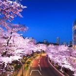 【2018】東京で桜が楽しめるスポット50選!定番から穴場までおすすめ厳選!