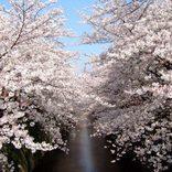 【関東】春のおすすめデートスポット32選!カップルでお出かけしたい場所まとめ