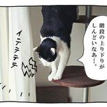 【猫写真4コママンガ】「PR表記」パンチョとガバチョ #84