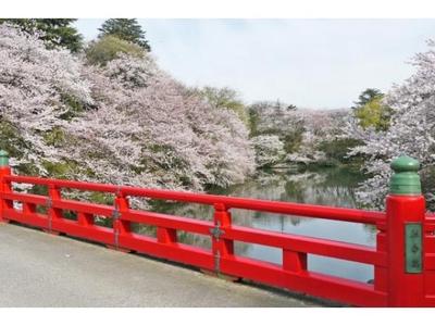 高岡桜まつり
