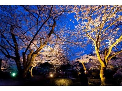 兼六園無料開園&金沢城・兼六園観桜期ライトアップ