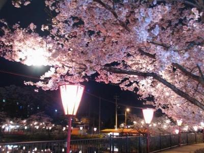 庄原上野公園桜まつり