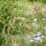 2018年も花粉のシーズン突入、今年は例年並みの花粉量。対策は?
