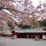 【滋賀】春のおすすめデートスポット22選!カップルでお出かけしたい場所まとめ