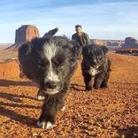 砂漠の真ん中で2匹の子犬を見つけた男性 一緒にアメリカ横断の旅へ出る