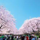 【東京都内】桜の名所でお花見デート♪2018年見頃やカップルで見たい夜桜情報も