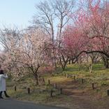 上品な梅の花に癒された、都心から気軽に行ける埼玉散歩~埼玉県嵐山町・滑川町編~