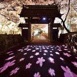 【2018】インスタ映え抜群!東海の桜絶景16選。圧巻の鏡桜や花畑コラボも