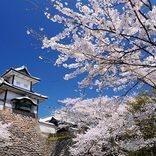 「花より団子」さんに朗報!桜と一緒に楽しむ花見グルメ【東海】