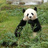 【全国】おすすめ動物園30選!家族や子ども、カップルで行きたい動物園を厳選