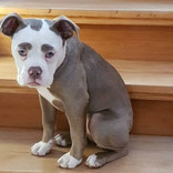 悲しそう…でもかわいい! 『悲しい』顔に見えてしまう犬がインスタで人気