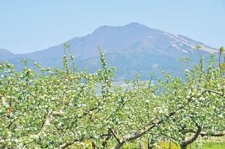 山ノ内町のりんごの花