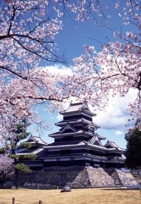 国宝 松本城の桜