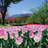【春の長野】おすすめ観光・デートスポット20選。日帰り・1泊2日モデルコースあり