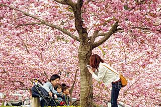八戸公園(こどもの国・八戸植物公園)