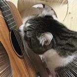 ああッ、猫様がギターに! 実は攻撃ではなくて