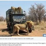 野生動物保護区のオーナー、手塩にかけて育てたライオンに襲われる(南ア)<動画あり>