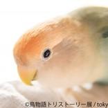 鳥たちの美しさに見とれる! 写真&物販展「鳥物語 トリストーリー展」開催