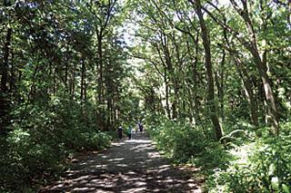 狭山市立智光山公園