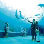 水族館デートならココ!大人が楽しいおすすめ水族館12選【東日本】