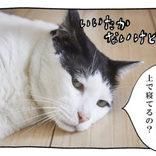 【猫写真4コママンガ】「ツッコミといじめの境界線」パンチョとガバチョ #91