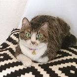 「この猫…普通と違う」 動画を見て度肝を抜かれた