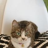 目を動かして見つめ返す猫、実は… 本物と見間違うほどの羊毛フェルトに反響