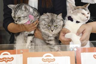 猫のいるお宿プチホテル・フロマージュ