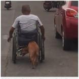 事故で半身不随になった飼い主の車椅子を押す犬(フィリピン)<動画あり>