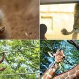 週末は可愛い動物に癒されに行こう! 都内近郊の動物園4選