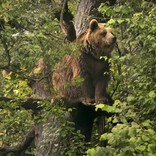 熊が民家侵入! 鳥のエサを食べる