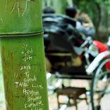 京都の竹林で、下世話な『落書き』が横行!理由を知って…2度、言葉を失う