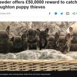盗まれた子犬11匹を連れ戻してくれたら…報酬725万円を提示したブリーダー(英)