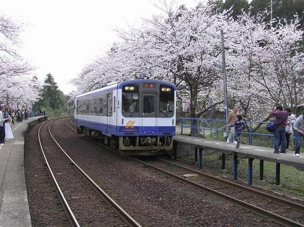 能登さくら駅の桜